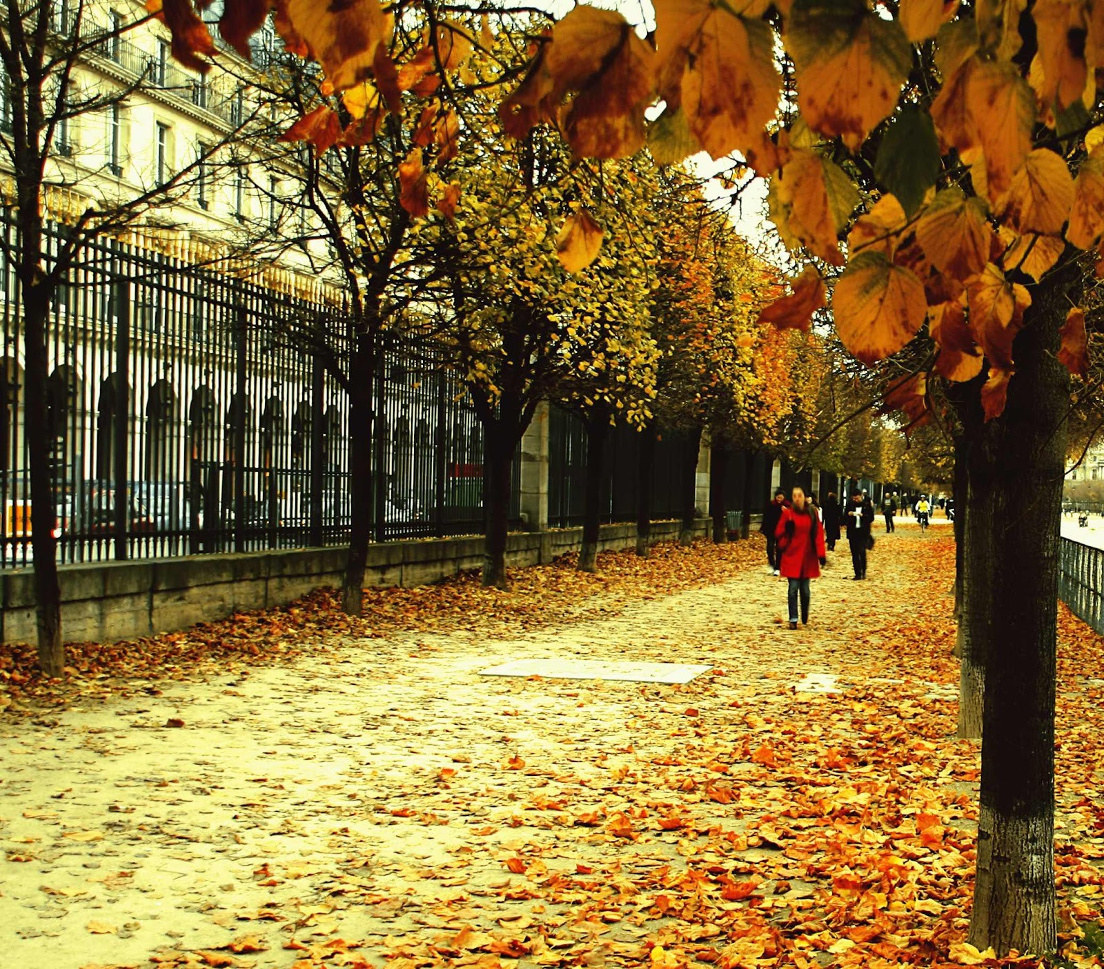 Autumn Street In Paris Hd Wallpaper Vicendi Consulting